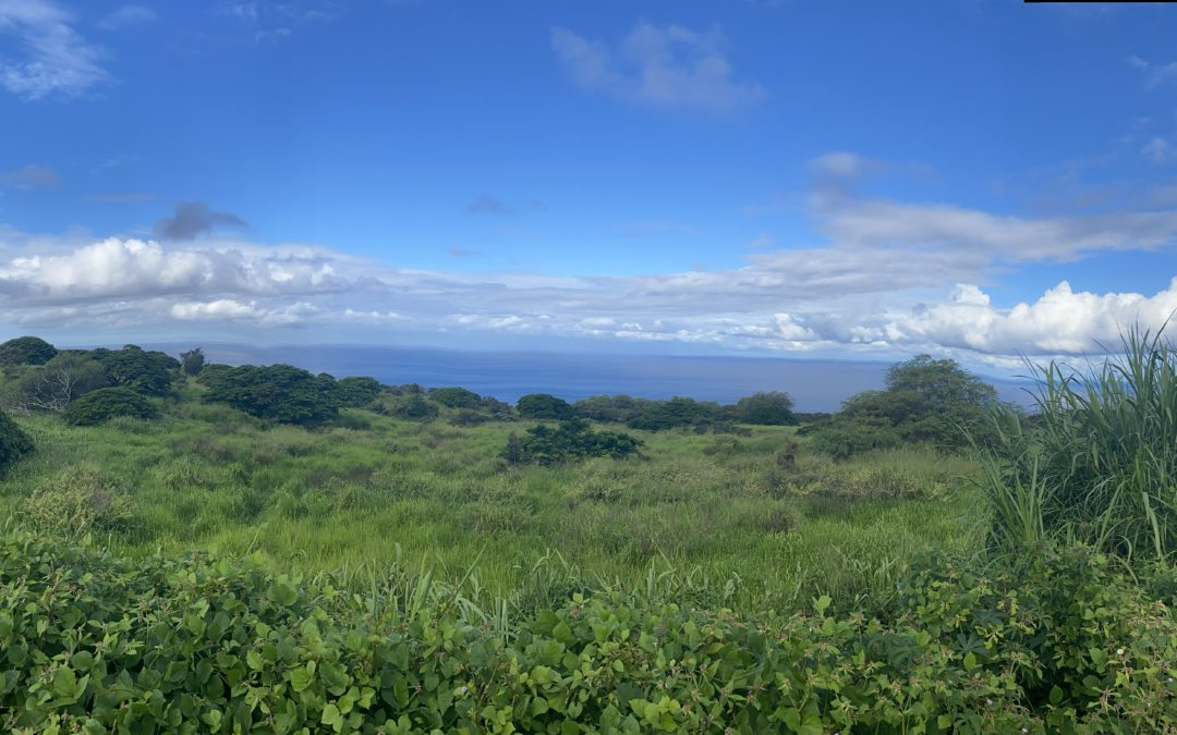 Let's Talk About Buying Land on Hawaii Island